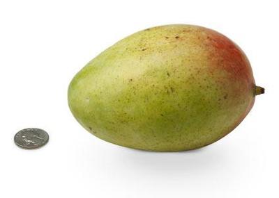 23-mango