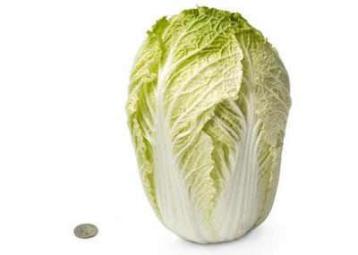 28-chinese-cabbage